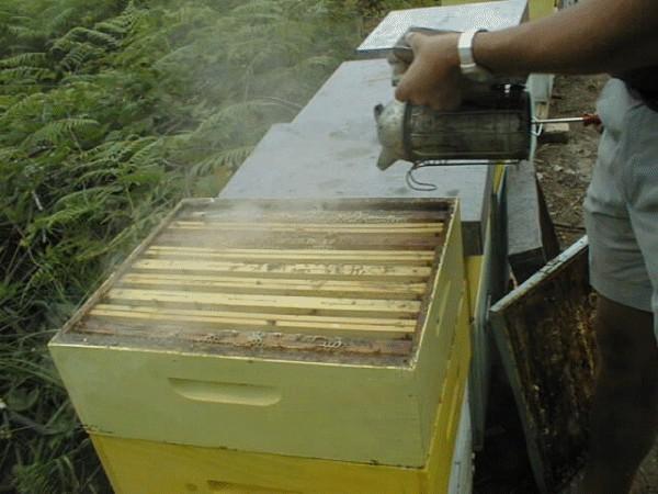 Apicoltura lavorare con api ed alveari produzione miele for Aprire le planimetrie con seminterrato